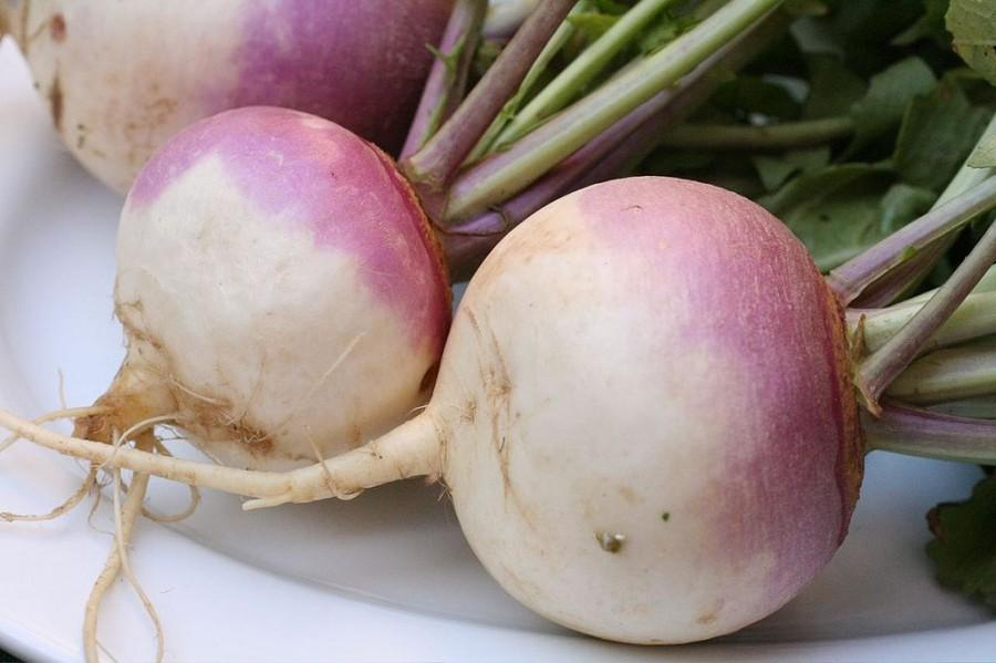 Students turnup for beets and turnips