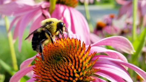 The bees are gone…or are they?
