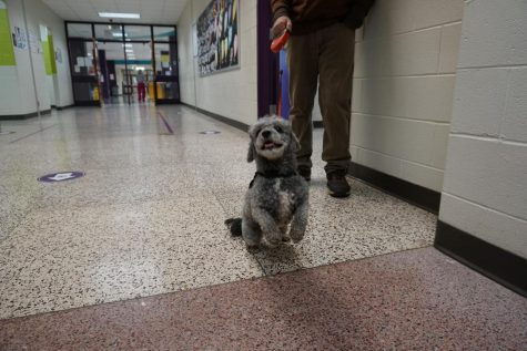 Meet a furry friend in the language department